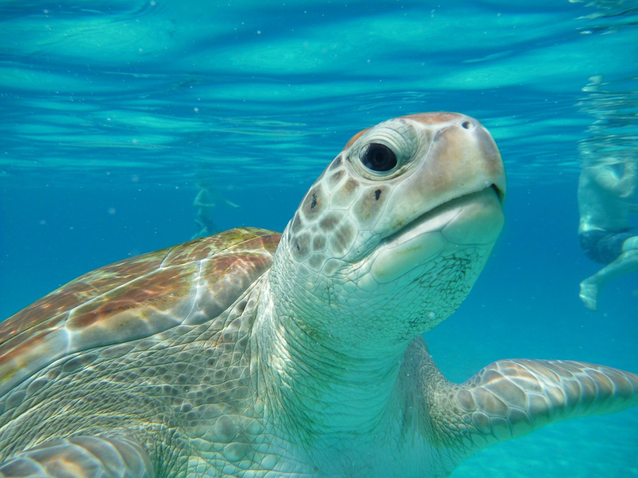 snorkel with these amazing sea creatures for an unforgettable experience